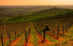 Le colline del Chianti al tramonto
