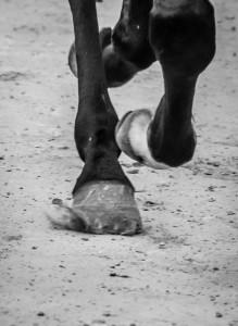Cavalli sul tufo - Foto di Davide Pini