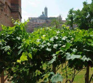 Vino Etrusco a Siena